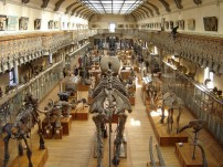 museum-histoire-naturelle