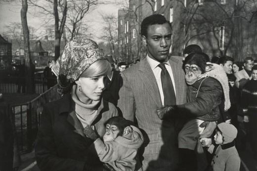 Central Park Zoo, New York, 1967, Garry Winogrand© The Estate of Garry Winogrand, courtesy Fraenkel Gallery, San Francisco