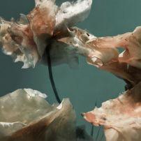 Ruth Peche - Deep entropy - Tirage sur papier sous verre.
